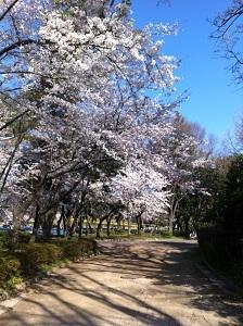 sakuira-meijyo2012�U.JPG